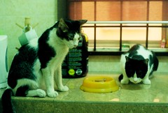 may 21st, 2013 (sexyinred) Tags: cats cute meow analogue kucing kodak200 minoltasrt100