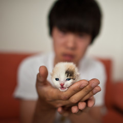 Little Tiger (Stefan Elf) Tags: china cute cat kitten tiger f16 tiny 24mm rescued littletiger notyettendaysold