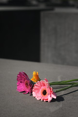 In memoriam (kana_boy) Tags: pink flowers berlin rose fleurs germany holocaust memorial allemagne memoriam mmoire holocauste