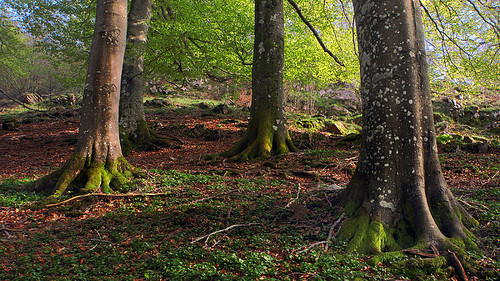 roots of some trees with beautiful light