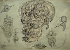 26 Human craniu  ochi ureche nana molar vortex sfera embrion anatomia pattern (kelemengabi) Tags: vortex gabriel standing spiral wave theory sphere helix universal resonance kelemen