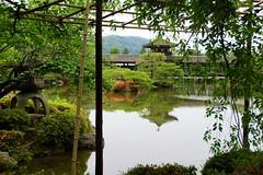 (nobuflickr) Tags: iris flower nature japan garden kyoto   heianjingushrine  20130606dsc03072