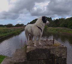 King of all he surveys (Osk.) Tags: dog pet canal buddy terrier parson