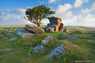 Dartmoor Delight