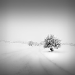 | Catharsis V  New Beginnings (Julia-Anna Gospodarou) Tags: trees winter blackandwhite bw white mountain snow nature monochrome square landscape fineart highlights minimal greece negativespace zen dreamy serene highkey 2012 snowscape winterscape catharsis 2013 metsovo nikond7000 blackandwhitefineartphotography tamron18270pzd juliaannagospodarou catharsisvnewbeinnings