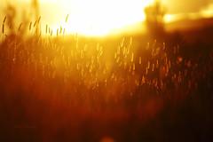 Saying goodbye (Aadilsphotography) Tags: sunset orange canon wide 70200