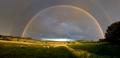 gold and other colours (Ray Byrne) Tags: field golden rainbow sheep alnwick northumberland pasture stormlight raybyrne byrneoutcouk webnorthcouk