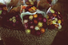 Flowers (Shintaro Masatomi) Tags: