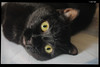 IMG_0162 (anto-logic) Tags: friends cats animals kitten amici gatti animali kissablekat