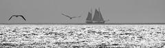 Seascape (Kees Waterlander) Tags: vlieland thenetherlands friesland
