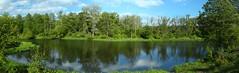 Narew (jacekbia) Tags: panorama nature river poland polska natura hdr rzeka narew roliny