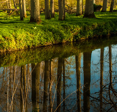 The edge.... (jola.mctotty) Tags: trees water reflections river woods surrey goldenlight betchworth rivermole