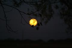 DSC00451 (carrie_20001jf) Tags: supermoon moon morning night astronomy texas sky texassky supermoon2016 2016 skyporn nature texasnature
