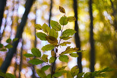 DSC00679 (gabriella.lavati) Tags: sony a6000 schneider kreuznach xenon edixareflexversion m42 50mmf19 manualfocus manual mflens nature spring sesoned color forest wood leaves bokeh bokehdream