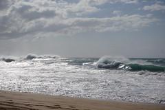 DSC05132 (neilreadhead) Tags: awt1 hawaii oahu waimeabay