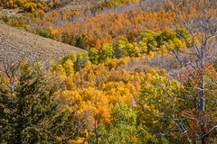 Fall Colors Still Going Strong in the Eastern Sierra (Jeffrey Sullivan) Tags: mono county easternsierra sierranevada leevining california united states usa landscape nature photography canon eos 6d photo copyright 2016 jeff sullivan october fall colors