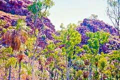 Fern creek Kimberley 1996 (SubiYurek) Tags: westkimberley kingleopoldranges gibbriverroad ferncreek palms eucalyptus rockyoutcrops