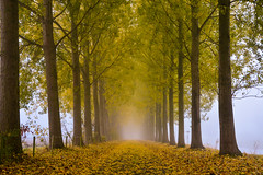 Into the white light (Jaco Verheul) Tags: mist fog tree nature foliage path landscape nikon d7100 jacoverheul 1685mm green yellow forest serene outdoor plant leaf