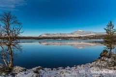 IMG_9418 (norwegen-fotografie.de) Tags: norw norwegen norway norge femunden femundsmarka villmark hedmark see wildnis wald landschaft