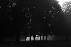 Niebla (DanGonzales75) Tags: niebla fog morning maana bnw blackandwhite people tres camino sombra shadow contraluz