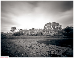The West Pond (DelioTO) Tags: 4x5 adoxchs100 beaches blackwhite canada d23 duotone f175 lake landscape natparks october ontario pinhole rain river rural toned trails woods