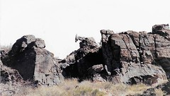 Able To Survive (Shot by Newman) Tags: rockformations mule southwest mineswork climbing nature daylight shotbynewman brush wildmule fujifilm 35mm fuji400