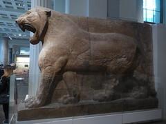 Lion of Nimrud (Aidan McRae Thomson) Tags: nimrud sculpture lion mesopotamia assyrian britishmuseum london statue ancient