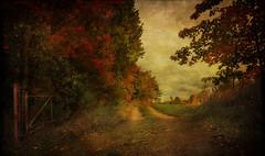 Autumn's End (Explore) (Carolyn Little) Tags: extraordinarilyimpressive untouchabledream novascotia textures autumn red leaves road dirt trees redmatrix ie rockpaper netartii