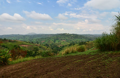 The green heart of Africa (supersky77) Tags: uganda africa hills colline crops campi coltivazioni countryside fortportal mahoma