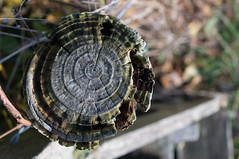 (danjamesphotography) Tags: sony sonynex sonynex3n nex nex3n yashica yashicaml yashicaml3528 yashica3528 contaxyashica cy wood weathered postbox gate