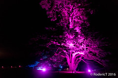 20161029-IMG_9254 Tree Compton Verney Warwickshire.jpg (rodtuk) Tags: phototypes 80d plant england nature b24 warwickshire comptonverney midlands places uk kit photographicequipmentused