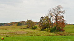Fields & Trees of Fall (DTD_5240) (masinka) Tags: eastaurora newyork unitedstates buffalo ny southtowns fields trees meadow green colors drizzly rainy day fall autumn rural country countryside patches land clouds cloudy foliage 2016 october photo photography etbtsy