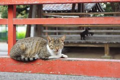 Today's Cat@2016-10-22 (masatsu) Tags: cat thebiggestgroupwithonlycats catspotting pentax mx1