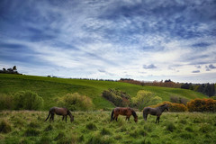 Country Colours (Kevin_Jeffries) Tags: landscape horse hills color light green spring standardbred field pasture grazing nikon nikkor new nature sky cloud tree rural idyllic