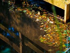 sonniger Herbstspaziergang Okt 2016 - 7 (mohnblume2013) Tags: wasser bach see bltter laub herbst bunt spiegelungen