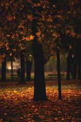 Autumn (♫♪♭Enricodot ♫♪♭) Tags: enricodot tree trees autumn ilobsterit garden leaf leaves red yellow orange park bologna montagnola