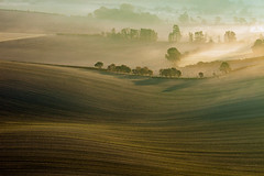Swaddles (S l a w e k) Tags: southdowns nationalpark autumn misty sunrise morning rolling hills uk england sussex countryside rural farming landscape ploughed field pastoral bucolic serene scene scenery outdoors travel europe