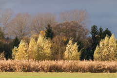 Vent d'automne (JiJi-aime) Tags: vent feuillage couleur ciel menaant roseaux petite camargue alsacienne