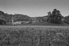 paesaggio (conteluigi66) Tags: paesaggio colle collina hill berg luigiconte alberi viti vitigni vitigno bosco chiesa borgo