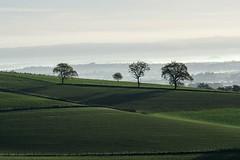 La brume au loin (lyli12) Tags: paysage aveyron matin campagne automne landscape nature arbre midipyrénées occitanie green vert agriculture france nikon d7000