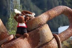 DSC01552 (The Crochet Crowd) Tags: crochetmoose amigurumi moose crochet doll alaska britishcolumbia thecrochetcrowd michaelsellick jeannesteinhilber danielzondervan crochetcruise mooseontheloose