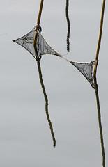 <I>I<I (luca19632 - Luca Cortese) Tags: venice italy colour reflection net italia colore web fishnet lagoon poles laguna pali venezia italie e55 chioggia rete riflesso veneto stradastataleromea ss305
