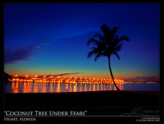 Coconut Tree Under Starry Night Stuart Florida Roosevelt Bridge (Captain Kimo) Tags: stars nightlights florida stuart nighttime coconuttree rooseveltbridge photomatix singleexposurehdr psuedohdr topazplugin captainkimo rosve
