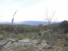 Covaleda - Pico Usera  (11) (Historia de Covaleda) Tags: espaa spain fiesta paisaje douro pinos soria historia pinar tradicion duero covaleda