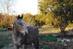 (Alexa Night) Tags: horses austin texas country captain hillcountry 2010 winter2010 february2010