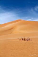 ( ibrahim) Tags: sky sun nature clouds canon landscape eos sand desert camel drought sands  ibrahim abdullah hilux           altamimi  alyahya