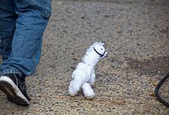 Ecuafest 2013, llama strolling (vetaturfumare - thanks for 2 MILLION views!!!) Tags: nyc toy ecuador stuffed harlem llama fair parade uws ecuafest