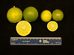 Anglų lietuvių žodynas. Žodis citrus fruit reiškia citrusiniai vaisiai lietuviškai.