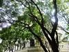 Baum mit Haus (beate.firlinger) Tags: photowalk beatefirlinger photowalkwien photowalkvienna pwvie photowalkvienna15062013