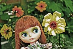 Jaaa, Dahlia's! (Athanassia) Tags: dahlia garden doll pop blythe neo tuin takara cwc